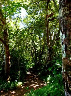 rain forest everywhere on Earth are endangered - already over half of rain-forests are destroyed. Photo taken in Maui small rainforest. Earth's rain forests balance Earth climate, a balanced climate is the only way to keep Earth beautiful in the way we know it